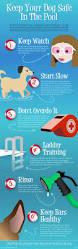 32 best dog infographics images on pinterest dog business cat