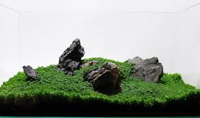 Japanese Aquascape by Manage Your Freshwater Aquarium Tropical Fishes And Plants