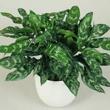 good low light plants 10 best houseplants for low light low light houseplants low