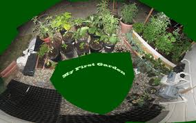 Zone Gardens - my first garden zone 9 gardening when to plant seeds and starts