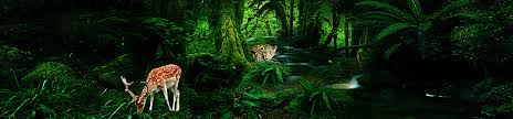 Deep Forest Green Deep Forest Background Photos 149 Background Vectors And Psd