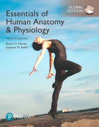 Human Anatomy And Physiology Textbook Online Essentials Of Human Anatomy U0026 Physiology Global Edition 12th