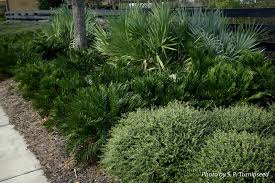 native plant society florida want an attractive low maintenance native plant landscape