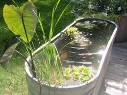 Small Backyard Pond Ideas by Above Ground Turtle Ponds For Backyards Check Out My Video Here