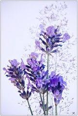 lavender flower designs