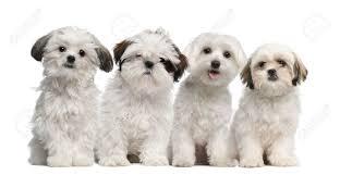 Types Of Dogs Adventure Dog Blog