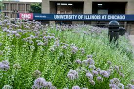 native illinois plants bee campus usa office of sustainability