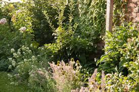 about the garden u2013 daily gardener