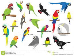 cartoon cockatiel cockatiel stock illustrations u2013 111 cockatiel stock illustrations
