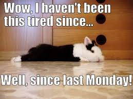So Tired Meme - rabbit ramblings bunny monday meme day