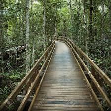 wooden boardwalk through forest in daintree rainforest australia