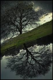 mirror tree by mosredna on deviantart
