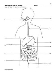best ideas of digestive system worksheets in example