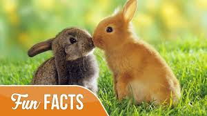 rabbit bunny 10 facts about rabbits