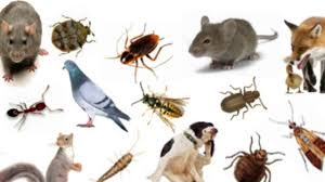 complete pest control services youtube
