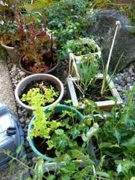 vegetable gardening containers does size matter