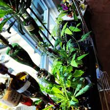 diy aquaponics how to build a self watering glass bottle garden