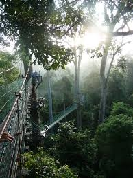Under Canopy Rainforest rainforest canopy walkway borneo ecotour wanderlust