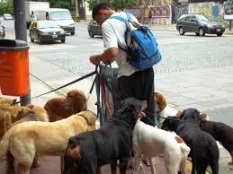 How to Start a Dog Walking Business Pet Business Pinterest