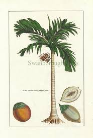 Home Decor Tree 168 Best Tropical Decor Images On Pinterest Plants Tropical