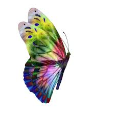 multi colored butterfly side view free stock photo domain