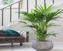 licht fã r badezimmer pflanzen fur badezimmer bananaleaks co
