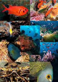marine life collage u2013 ascension island government