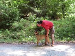 Bad Homburg Wetter Dog Academy Bad Homburg Rudellauf Wesenprüfung Hundebetreuung