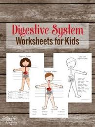 digestive system worksheet and a variety of others skeleton