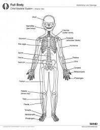 Female Anatomy Diagram For Kids Skeletal System Anatomy In Children And Toddlers Overview Gross