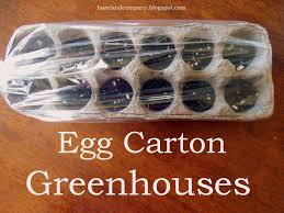 egg carton greenhouses this is a great way to start seeds in