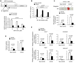 Assmann B Om El Dipeptidyl Peptidase 4 Induces Aortic Valve Calcification By