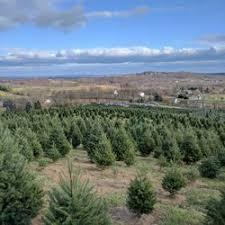 Christmas Tree Farm Va - snickers gap christmas tree farm 59 photos u0026 16 reviews