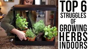 lights to grow herbs indoors top 6 struggles of growing herbs indoors w solutions garden