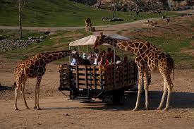 to the san diego zoo and animal park taking the