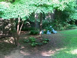 how to landscape wooded backyard u2013 izvipi com