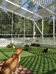 Outdoor Cat Condo Plans by Kitties Enjoying Their Garden Catio Outdoor Cat Enclosure