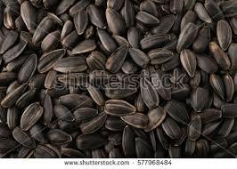 sunflower seeds stock photo 71993431 shutterstock