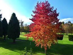 pretty trees leominster golf club