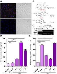 serotonin modulates insect hemocyte phagocytosis via two different