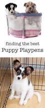 best 25 puppy playpen ideas on pinterest puppy crate crate