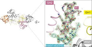 structure analyses reveal a regulated oligomerization mechanism of