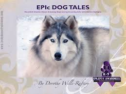 belgian shepherd epilepsy show us your purple in support of k9 epilepsy awareness kings