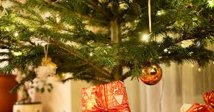 how you can use hairspray and red bull to stop your christmas tree