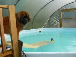 hydro at home pools u2013 canine hydrotherapy equipment by k9surf
