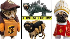 Female Dog Halloween Costumes Halloween Pug Puppy U0026 Kitty Cat Crazy Pet Halloween