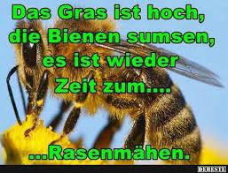 bienen sprüche das gras ist hoch die bienen sumsen lustige bilder sprüche