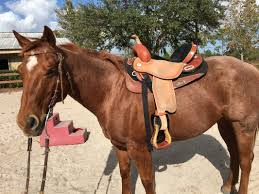 horse saddle improve your horse u0027s saddle fit with this simple solution