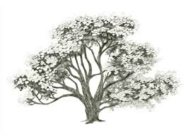 how to draw a realistic tree trunk or branch as part of drawing