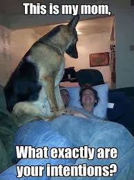 Funny German Shepherd Memes - you better answer him the meta picture